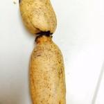 れんこんの簡単レシピ、我が家で人気のレンコンおつまみ&おかず3品!
