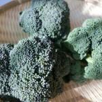 ブロッコリーのレシピ、ちょっぴり大人な「ブロッコリーのごま和え」